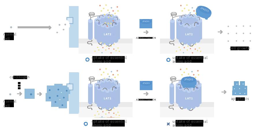 Draft illustration (LAT1 [SLC7A5] inhibition)