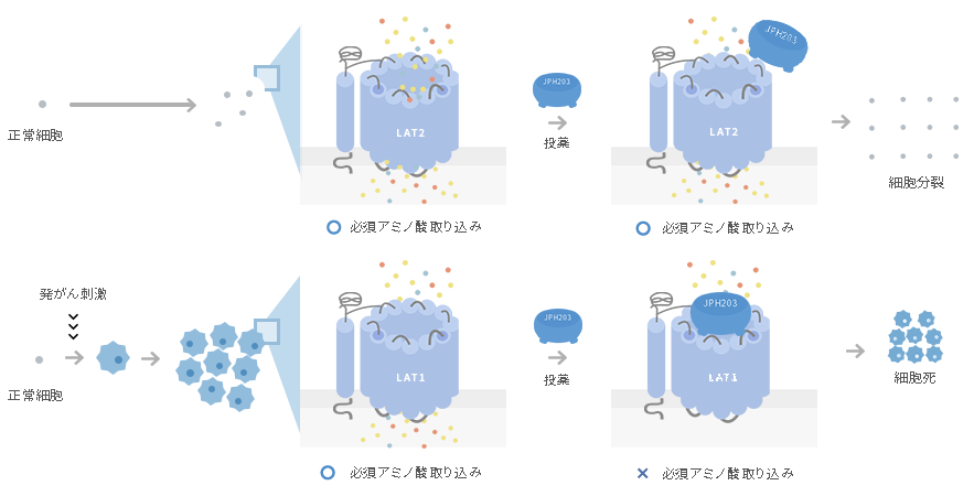 LAT1(SLC7A5) 阻害